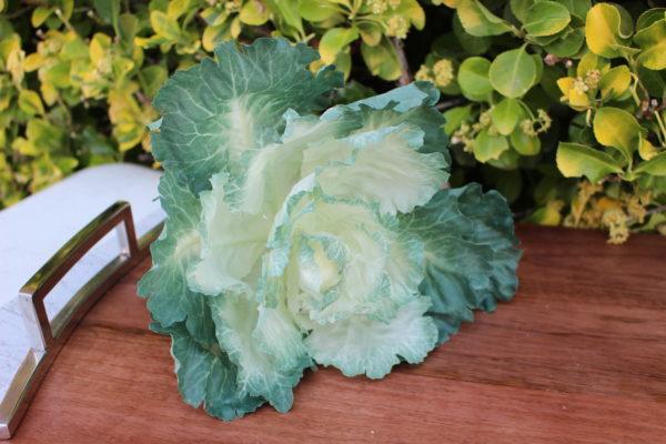 Fake Green Cabbage Head