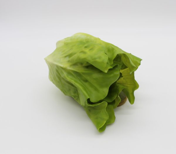 Small Green Romane Lettuce