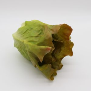 Small Red Romane Lettuce